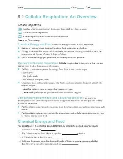 Cell Respiration Worksheet