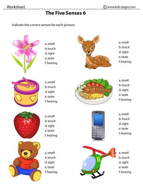 Our Five Senses Worksheets