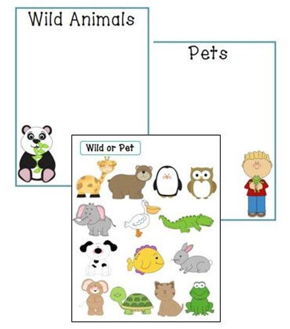 Wild Animal Or Pet Sorting Game