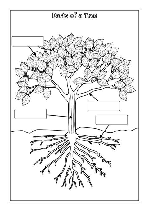 Parts Of A Tree Labelling Worksheets (sb12381)