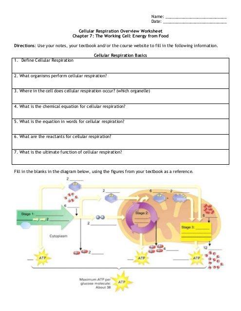 Cellular Respiration Overview Worksheet Chapter 7