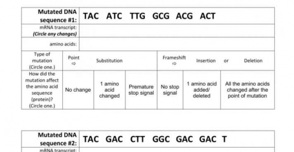Dna Mutations Practice Worksheet Answers Conclusions