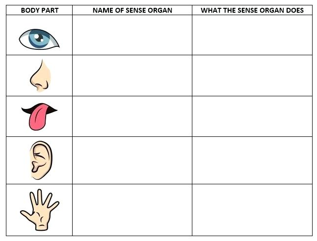 Five Senses Worksheets This Page Has A Lot Of Free Printable 5
