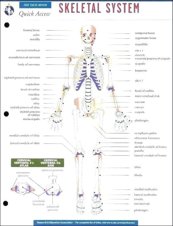 Halloween Skeleton Printable Skeletal System Labeling Worksheets