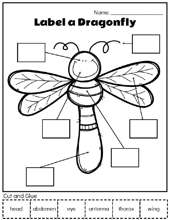 Insect Printables Insect Unit Study Use These Fun Printable