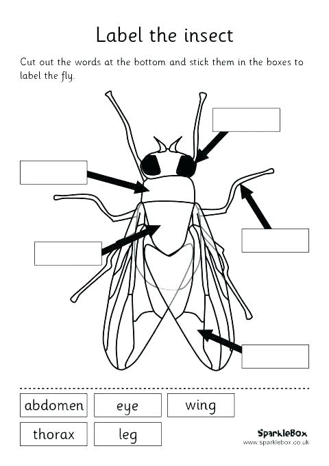 Insect Worksheets For First Grade Bug Insects 2 Crossword Old