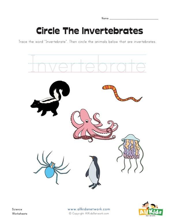 Circle The Invertebrates Worksheet