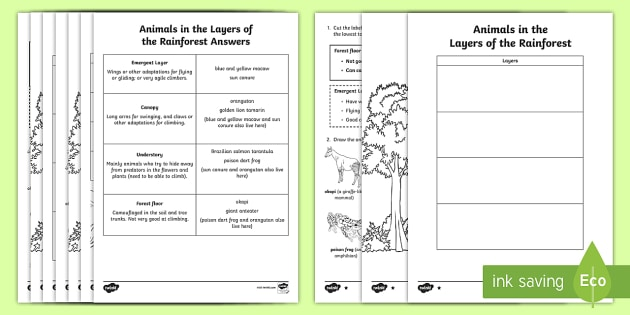 Animals In The Layers Of The Amazon Rainforest Read And Draw