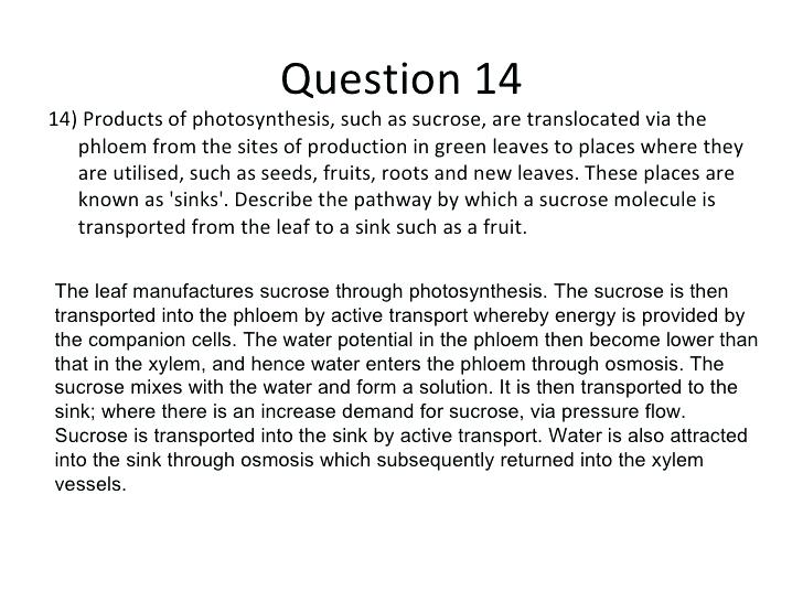 Photosynthesis Starts With Worksheet Answers