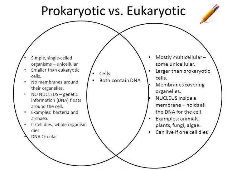 Prokaryotes Vs Eukaryotes Worksheet