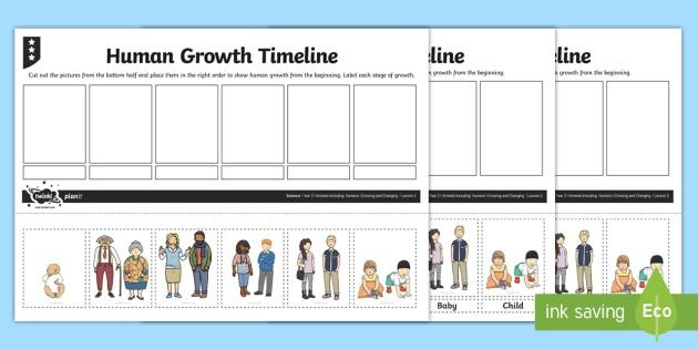 Human Growth Timeline Worksheet   Worksheet
