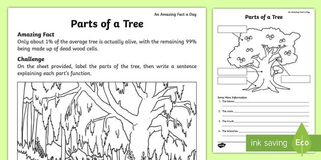 Parts Of A Tree Worksheet   Worksheet