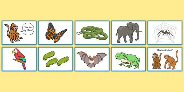Monkey Puzzle Matching Game