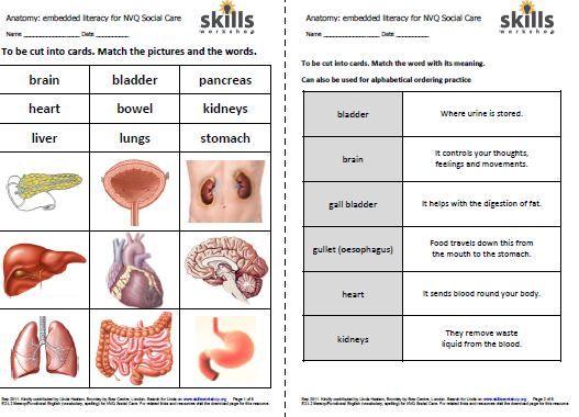 Free Internal Organs Worksheet