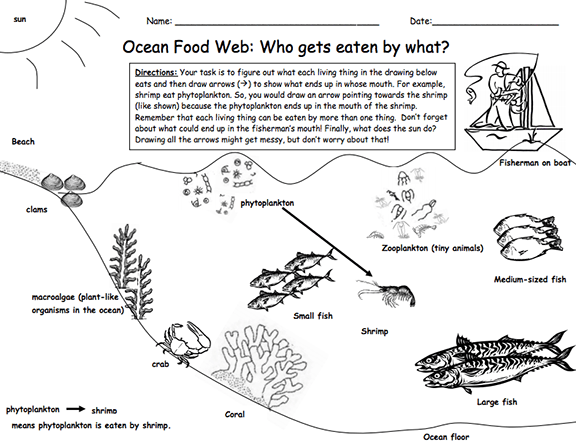 Here's A Lesson And Materials On A Marine Food Web