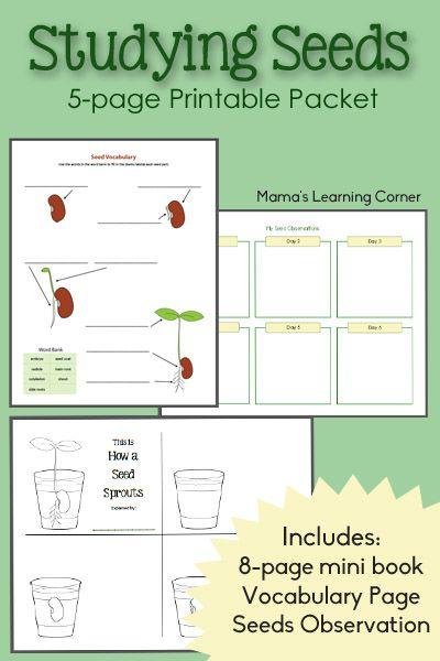 Studying Seeds – Printable Mini