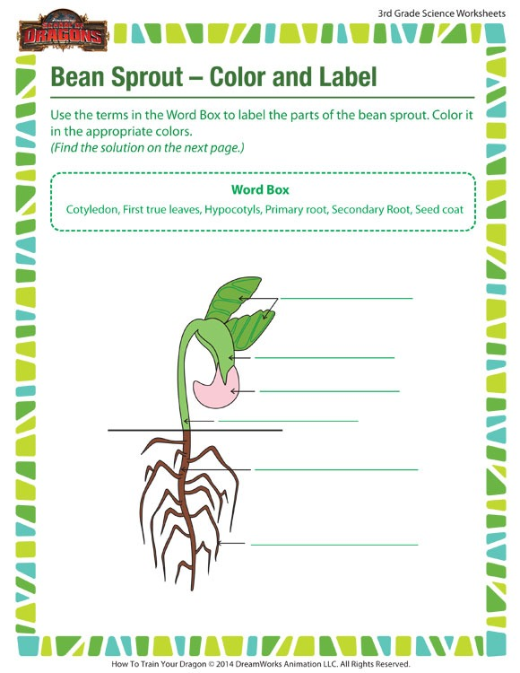 Bean Sprout – Color And Label View – Worksheet 3rd Grade – Sod