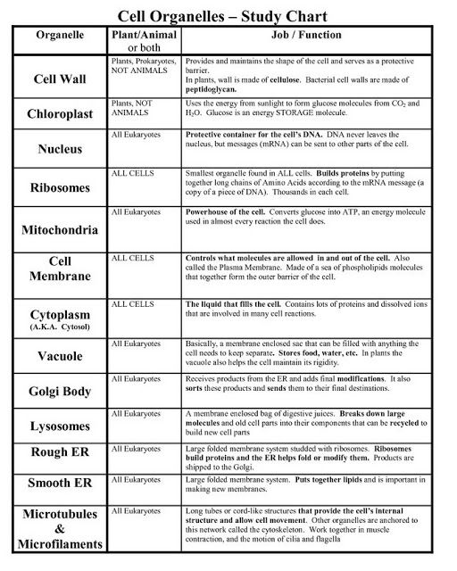 Cell Organelles And Their Functions Worksheet Answers