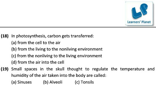 Science Revision Worksheets On Respiration In Organisms For Class
