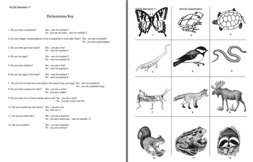 Simple Dichotomous Key Worksheet