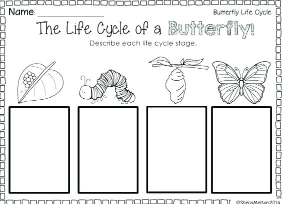 Life Cycle Of A Butterfly Worksheets Butterfly Life Cycle Cut And