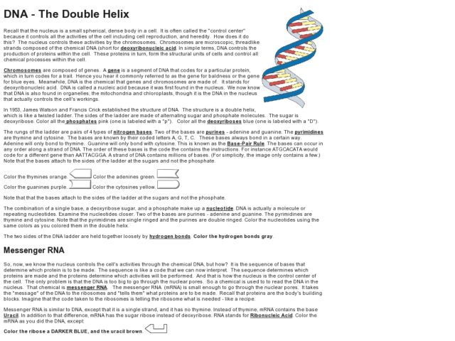 Nucleic Acid Worksheet Answers – Match Problems