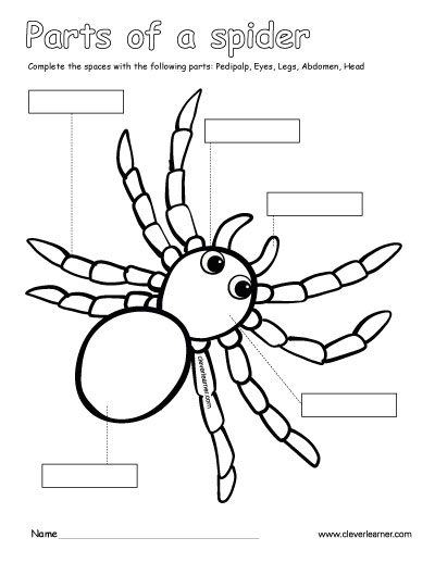 Label And Color The Parts Of The Spider