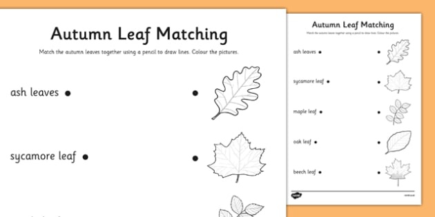 Autumn Leaves Matching Worksheet