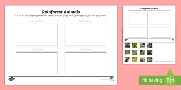 Rainforest Animals Sorting Worksheet   Worksheet