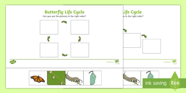 Minibeasts Life Cycle Of A Butterfly Printables