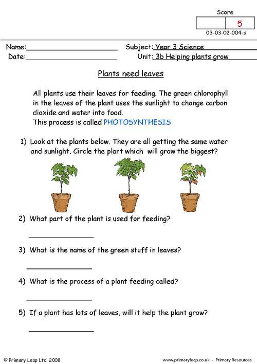 Plants Need Leaves