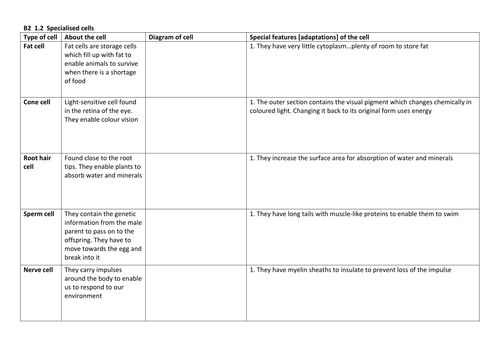 B2 1 3 Task Specialised Cells Worksheet Docx