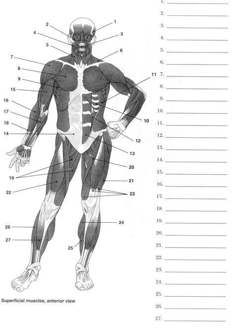 Label Muscles Worksheet