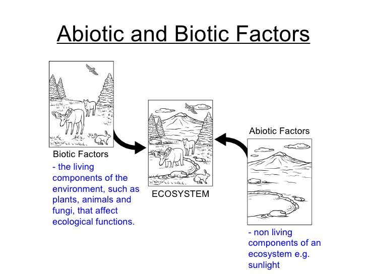 Ecology Biotic And Abiotic Factors Worksheet