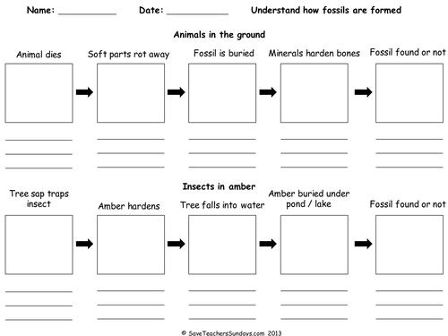 Fossil Worksheets 7th Grade  Worksheet  Free Printable Worksheets