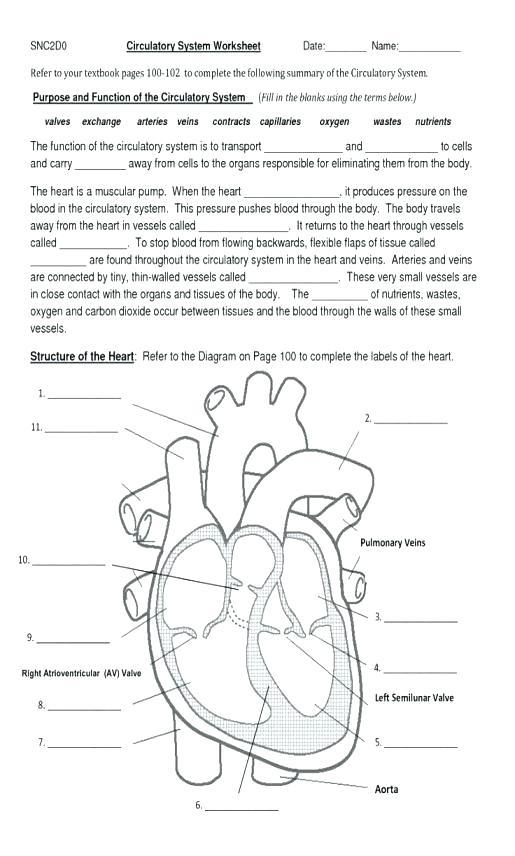 Free Circulatory System Worksheets Kindergarten Science Printable