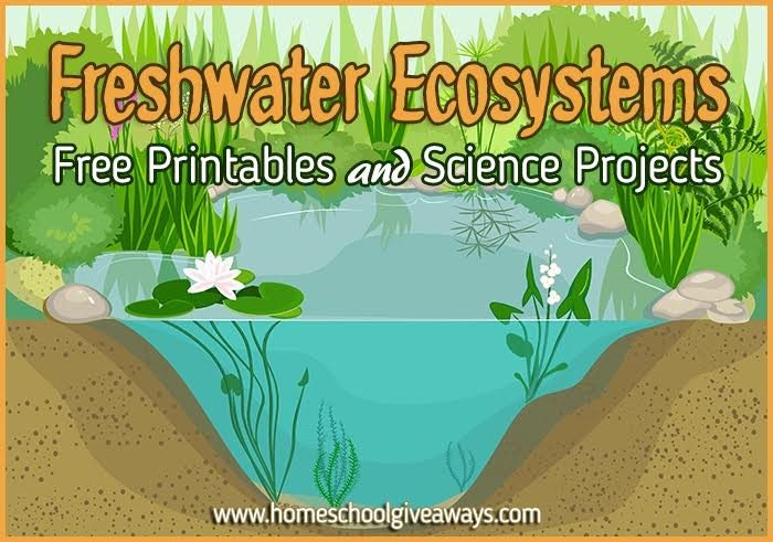 Freshwater Ecosystems  Free Printables And Science Projects