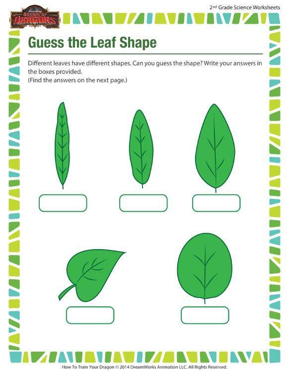 Guess The Leaf Shape Worksheet – 2nd Grade Science Printable – Sod