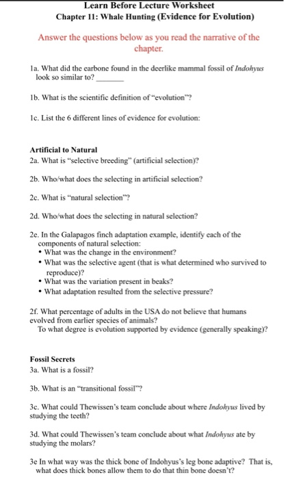 Solved  Learn Before Lecture Worksheet Chapter 11  Whale H