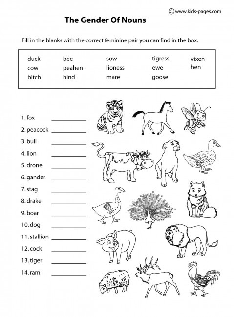Animals Gender B&w Worksheet