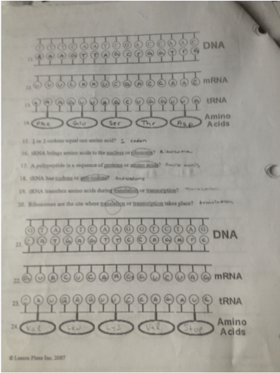 Enzymes, Dna, And Protein Synthesis