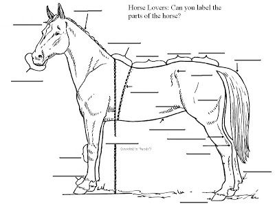 Can You Label The Parts Of A Horse  Basic Horse Anatomy Check