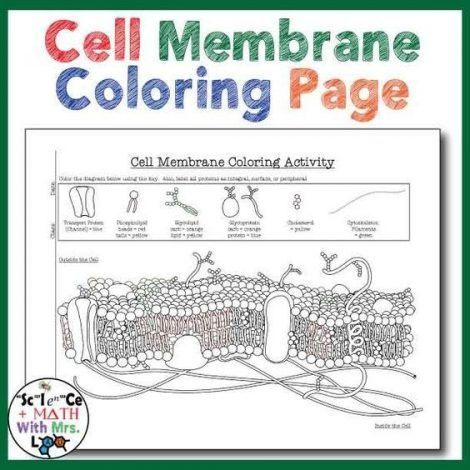 Cell Membrane Coloring Worksheet Answer Key 1