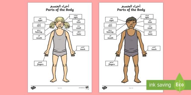 Parts Of The Body Senses Labeling Worksheet   Worksheet Arabic English