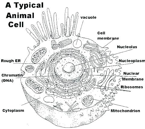 Cells Coloring Pages – Danquahinstitute Org