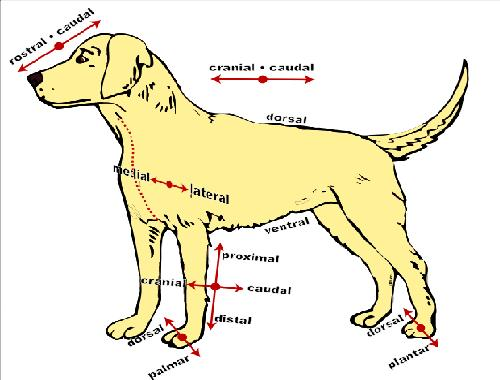 The Anatomy And Physiology Of Animals Directional Terms Worksheet