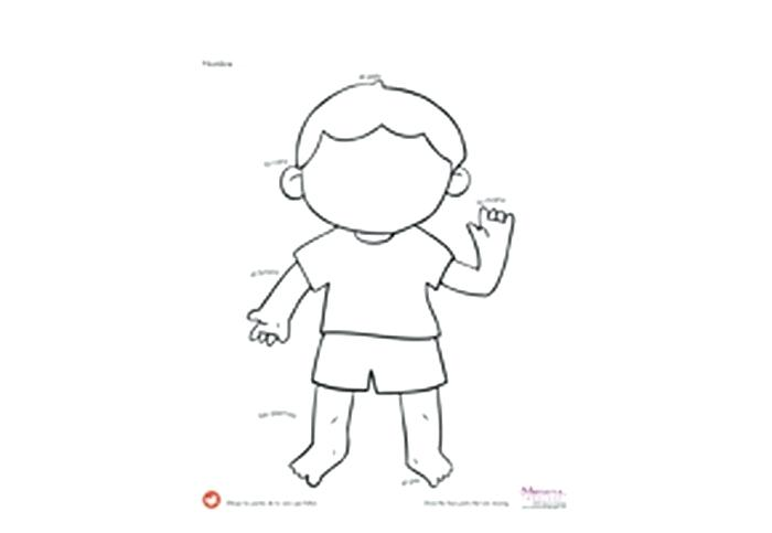 Face Body Parts Worksheets Cool Preschool Worksheets For Kids Body