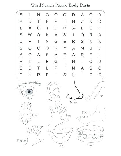 Free Printable Worksheets Preschool Body Parts Worksheets For