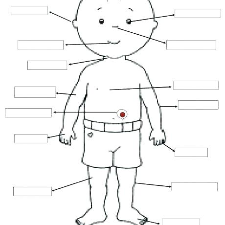 The Human Body For Kids Worksheets