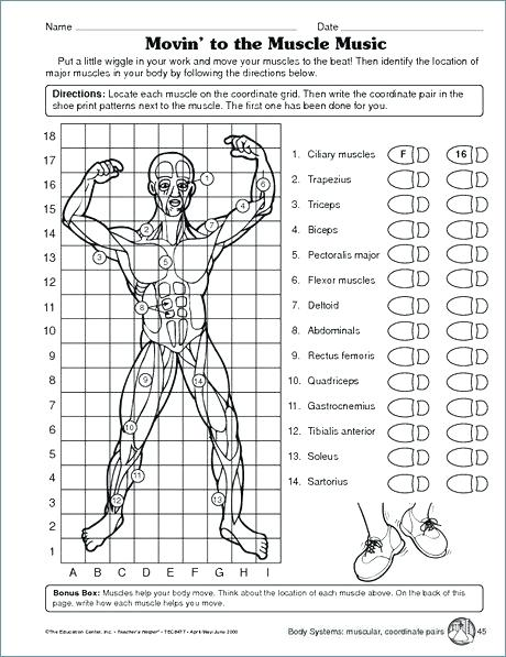 Human Body Systems Worksheets Pdf Cells Tissues Organs Matching